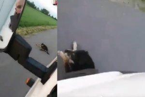 Żywy pies rozjechany przez bezmyślnego kierowcę