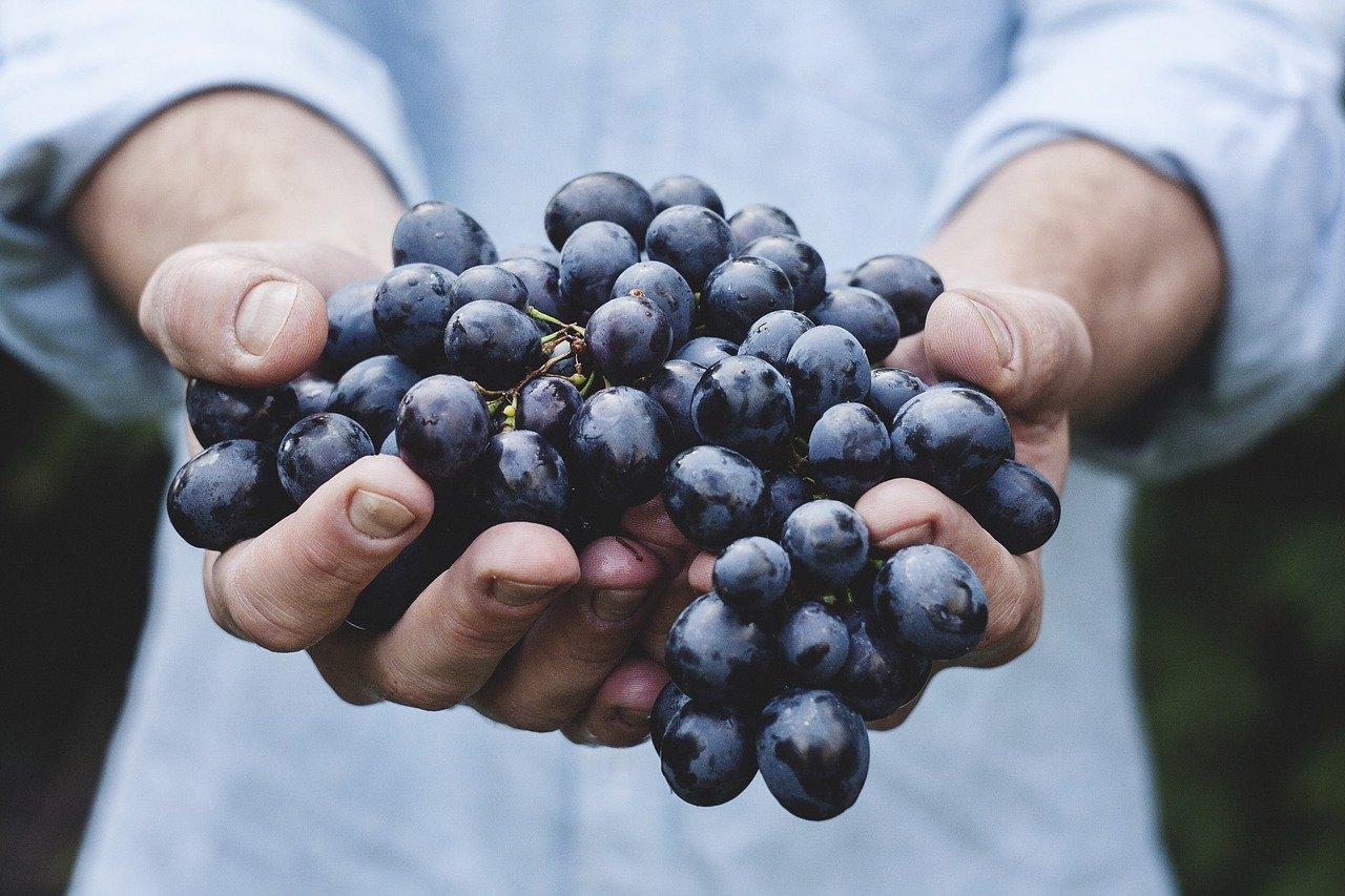 Ciepła zima uniemożliwiła produkcję niemieckiego wina lodowego